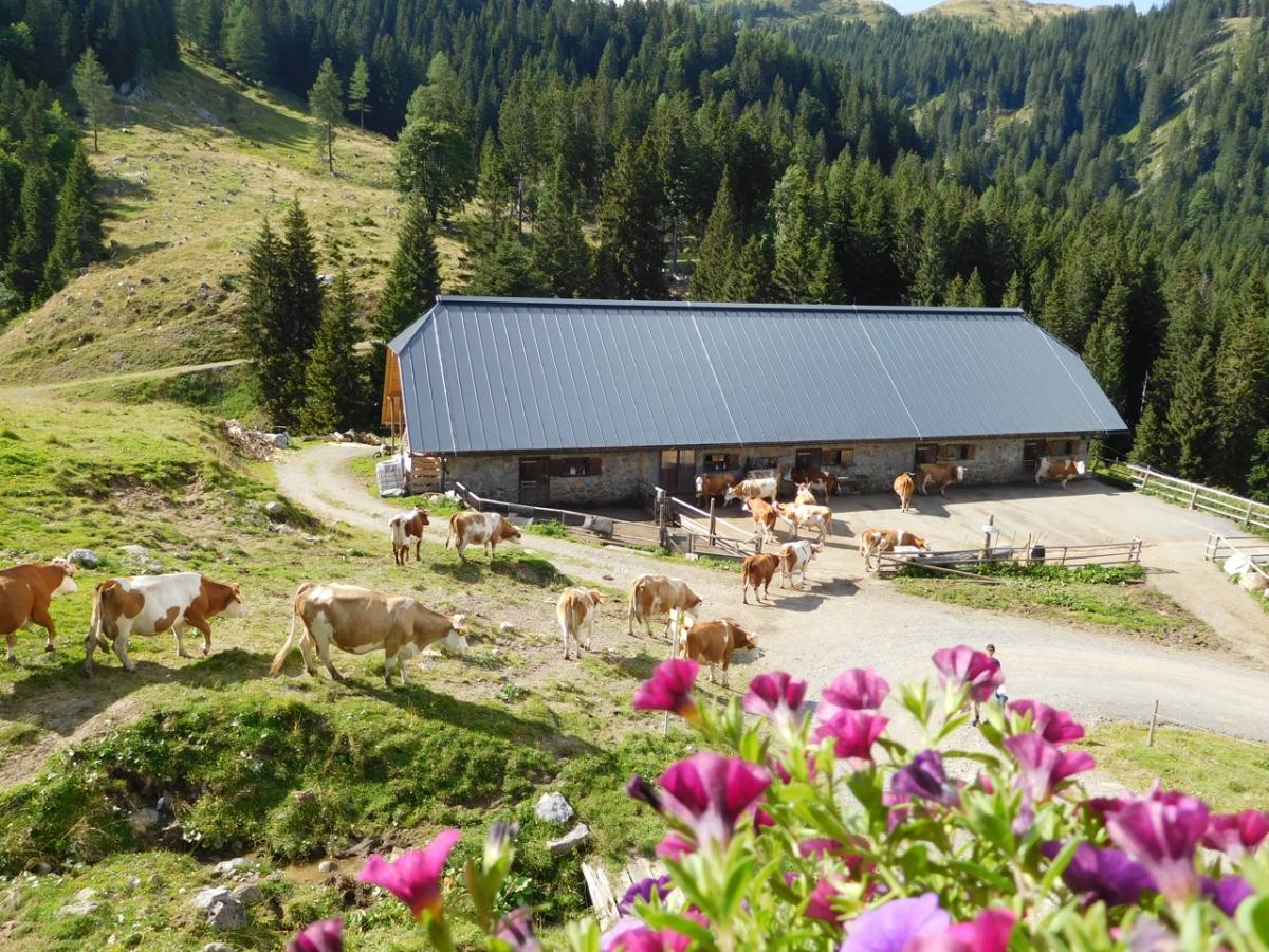 Gailtaler Almkäse aus Kuh- und Ziegenmilch von der Straniger Alm